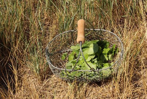 chasse-tresor-plantes-comestibles-ile-aux-moines-pluie-evenements-marie-chemin-pole-ressources-kairos