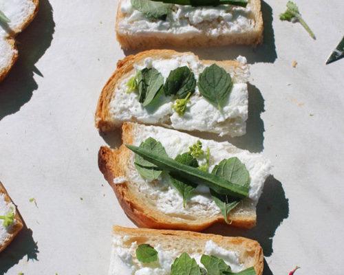 fromage-blanc-revisite-2-plantes-comestibles-chasse-tresor-ile-aux-moines-pluie-evenements-marie-chemin-pole-ressources-kairos
