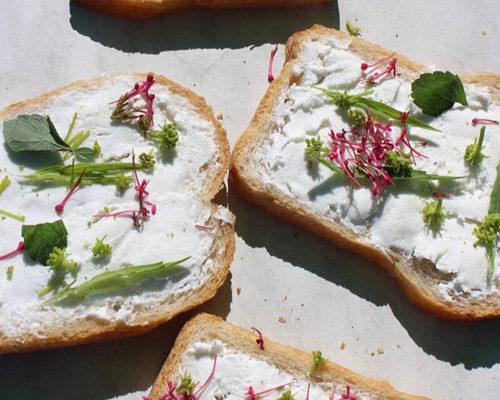 fromage-blanc-revisite-plantes-comestibles-chasse-tresor-ile-aux-moines-pluie-evenements-marie-chemin-pole-ressources-kairos